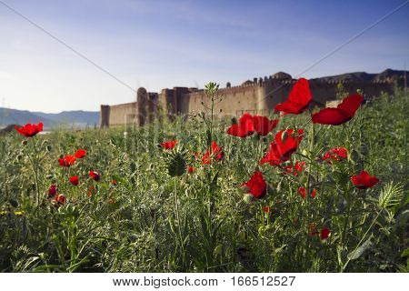 Old castle in Kazakhstan. Fortresses of nomads. The walls and gates of the old fortress of stone and lined with patterned tiles. Battle towers guarding the fortress. Asia poppy fields