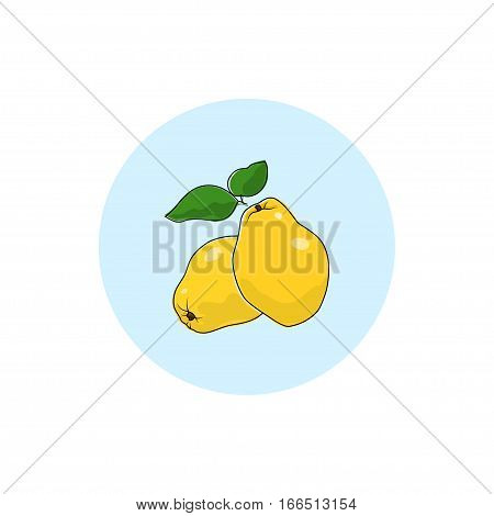 Quince ,Round Icon Colorful Quince, Fruit Icon