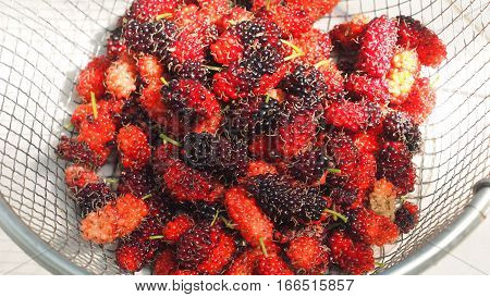 Fresh mulberry fruit in sieve aluminum on white background from my small plant in house Macro photo focus select at center and zoom in.