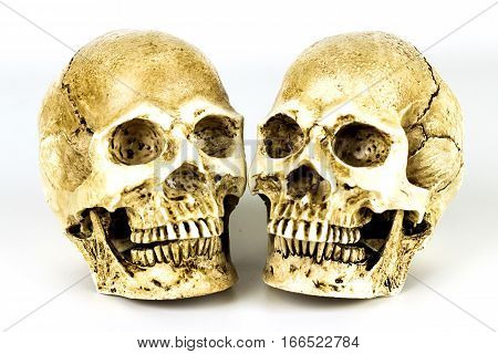 Two Human skull on the white background.