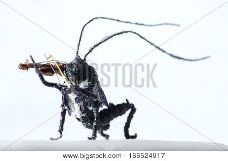 Miniature Of Wooden Bug