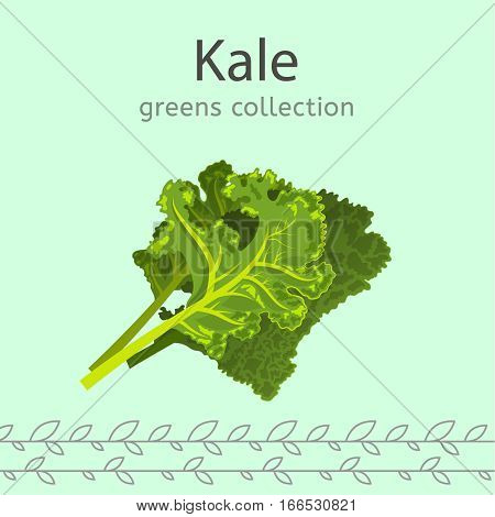 Green kale leaves on a light background. Greens collection. Vector illustration.
