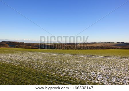 Yorkshire Wolds Wheat Field
