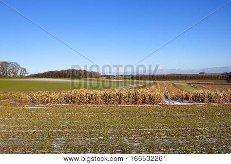Agricultural Landscape In Winter