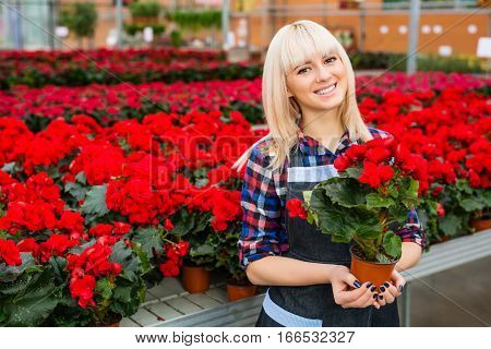 flower seller, young woman standing at shop with red potted flower in hands happily looks at camera