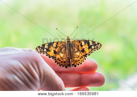 Butterfly painted lady on his arm at the window tends to freedom