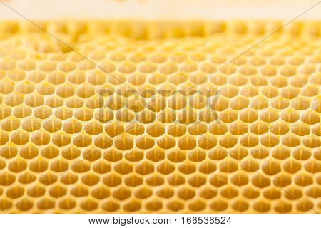 Close up of new empty natural honey bee comb ready to be filled with nectar honey pollen or brood.