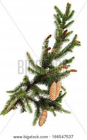 Christmas tree winter symbol on a white background