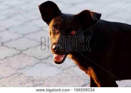 The happy face of a dog with dark fur. Homeless dog.