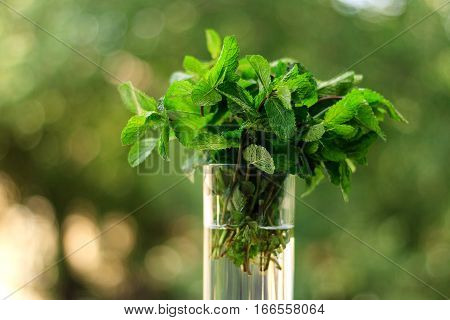 Fresh mint for cocktails in a transparent glass beaker. Mint for mojitos on a natural background.