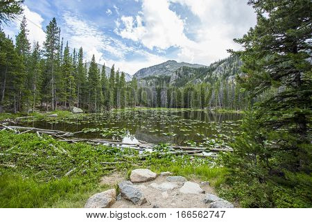 Colorado Mountain Lake with Lily Pads and Evergreens