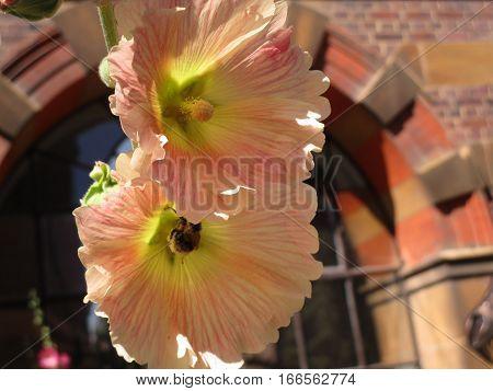 Flores hermosas en medio de la ciudad de cambridge