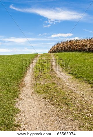 A dirt road leading up a hill and past a cornfield under a bright blue sky