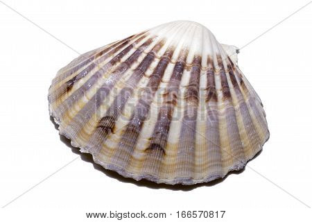 Multicolored and striped clamshell isolated on white tropical travel concept