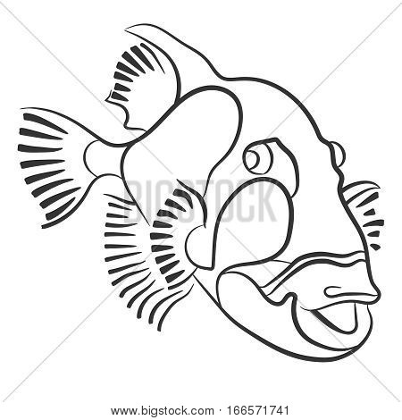 Titan triggerfish drawn with a pencil, Balistoides viridescens red sea fish poster
