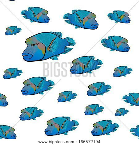 Red sea fish Napoleon fish pattern. Humphead wrasse