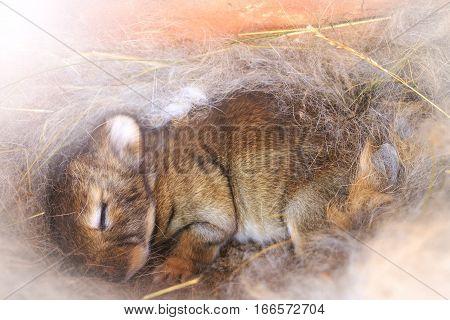 Bunny Sleeps In A Nest Of Hair With Sunny Hotspot