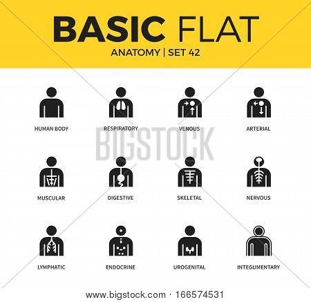 Basic set of human body, venous nervous and skeletal icons. Modern flat pictogram collection. Vector material design concept, web symbols and logo concept.