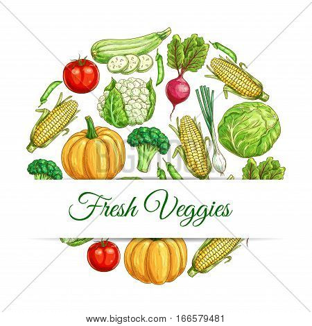 Veggies poster. Vector sketch vegetables harvest of farm fresh and organic ripe cauliflower, corn and beet, pumpkin and leek onion, tomato and broccoli, cabbage, zucchini squash and green peas