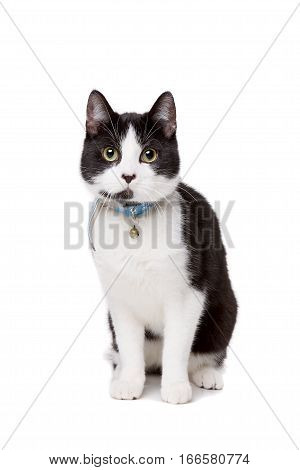 Black And White Short Haired Cat