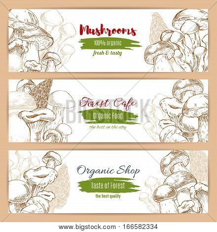 Mushrooms banners set of vector sketch edible mushroom champignon and gourmet morel and truffle, chanterelle, russule and milk mushroom or honey agaric, woolly milkcap porcini and forest cep. Design for organic mushroom shop or cafe