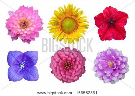 Different beautiful flower isolated on white background