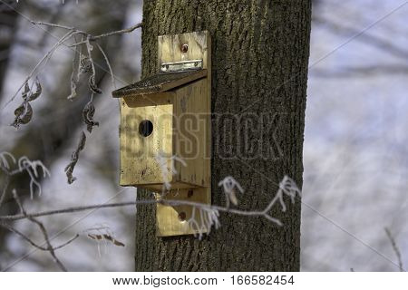 box for birds in tree in the winter