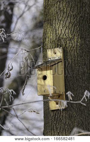 Litle box house for birds in tree in the winter