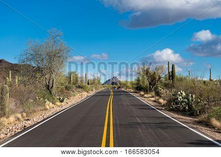 Thousands of saguaro cactus plants in National Park West near Tucson Arizona