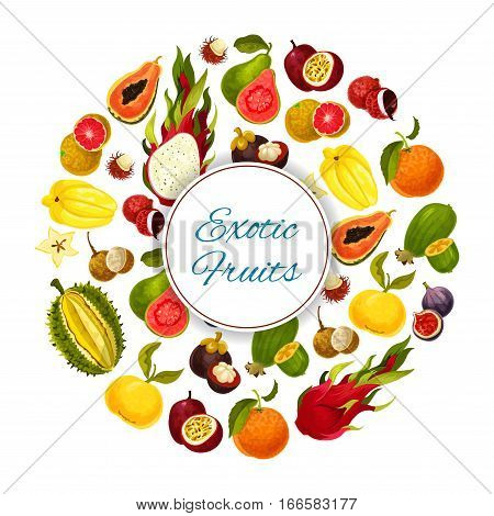 Exotic fruits. Vector poster of tropical fresh grapefruit or red orange, guava and durian, juicy longan and figs, rambutan and mangosteen, passion fruit maracuya and feijoa. Ripe harvest of dragon fruit and lychee, tropic papaya and carambola