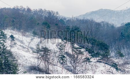 Winter landscape of the side of a mountain covered in snow evergreen trees and an overcast sky