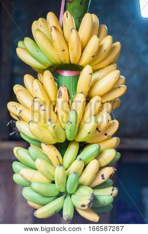 bananas in the market. banana crops. banana fruit