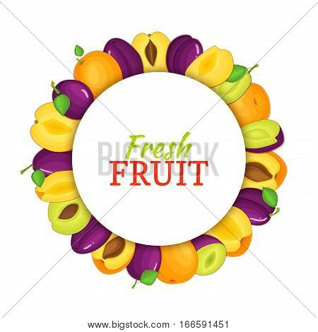 Round colored frame composed of delicious apricot plum fruit. Vector card illustration. Circle apricots plums frame. Ripe fresh fruits appetizing looking for packaging design of juice, breakfast food