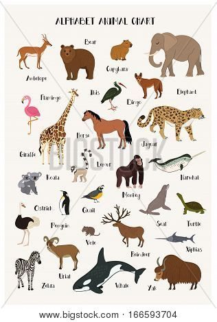 Alphabet animals chart set isolated vector illustration. ABC for kids education in preschool. Zoo animals alphabet with panda, reindeer, narwhal, dingo, seal, ibis, zebra, penguin. Different animals with name. Cartoon animals characters.