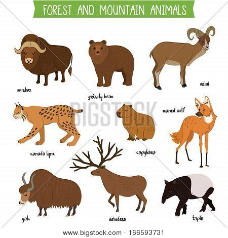 Forest and mountain animals set isolated vector illustration. Muskox, grizzly bear, urial, lynx, capybara, wolf, tapir, reindeer, yak. Forest and mountain wildlife animals collection. Cartoon animals set. Animals icon collection. Different forest animals.
