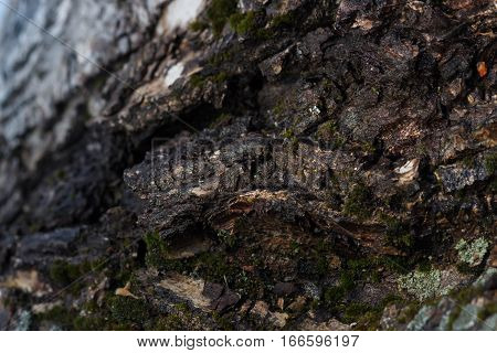 Old Wood bark Tree Texture Background Pattern