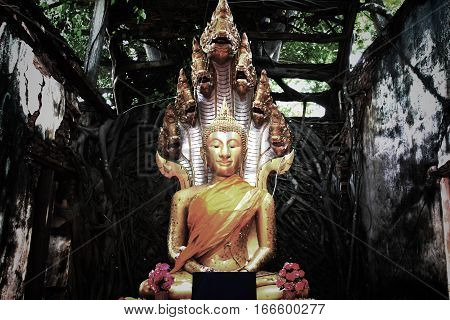Unseen ThailandRuins of old temple with a Bodhi tree rootSang Katea templeSala Daeng Muang Angthong Thailand (Public property)