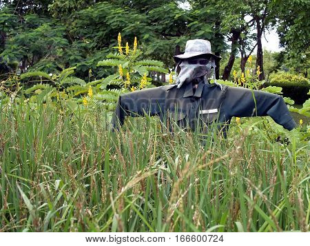 scarecrow in dark green shirt with hat protect rice paddy field from birds and pests