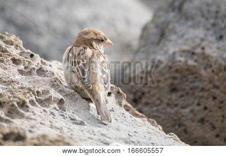 The portrait of little bird at the beach of St. Kilda beach Australia.