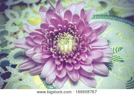 Pink Aster Flower Macro Retro