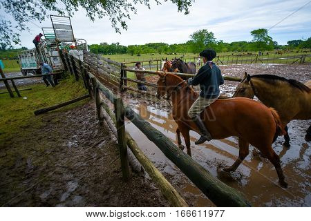 San Antonio de Areco, Argentina - Nov 13, 2016: A young gaucho cowboy riding a horse in a paddock on November 13, 2016 in San Antonio De Areco, Argentina.