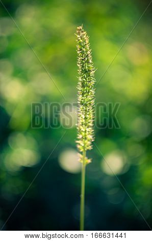 Wild Plants On Field Closeup, Background