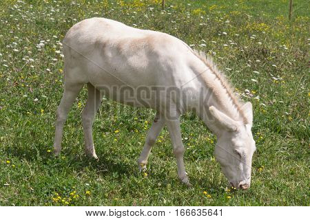 a donkey looking like a horse or the other way round?