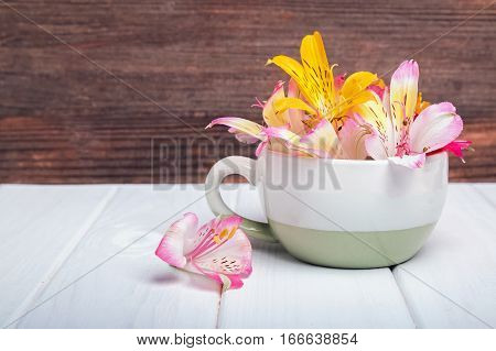 Colorful alstromeria flowers in the cup on the wooden table.
