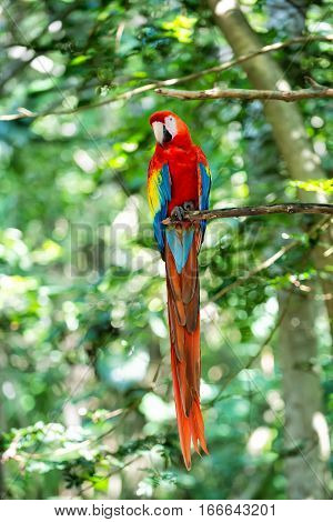 Red, Blue, Yellow Ara Parrot Outdoor