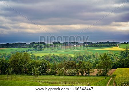 Belgium Rustic Landscape with Countryside Road on Green Grass and Yellow Flowers Field Against Dramatic Sky in Summer Day Outdoors