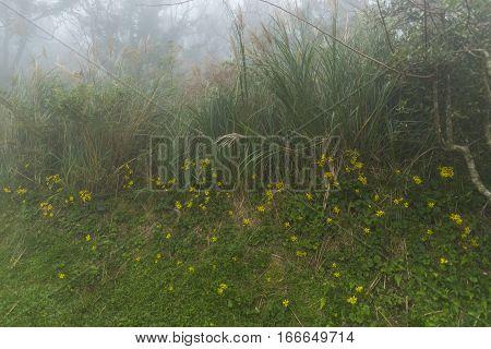 Taiwan Nature Trail in Foggy and Raining Autumn at Yangmingshan National Park in Taipei Taiwan.