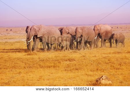Elephant family in the evening light in Maasai Mara National Reserve, Kenya, Africa