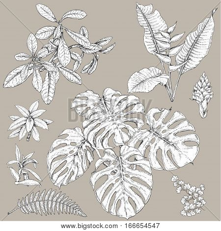 Hand drawn branches and leaves of tropical plants. Black and white floral set isolated on gray background. Synadenium monstera fern fronds sketch.