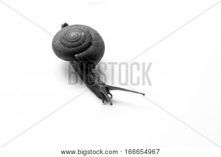 The snail move slowly on the white background